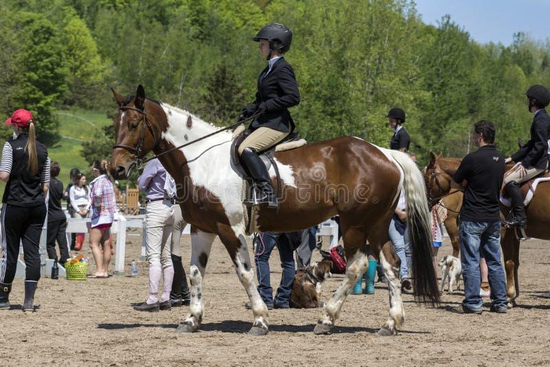 Jinete del caballo imagenes de archivo