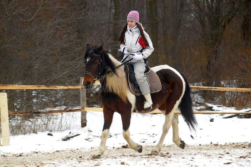 Jinete del caballo del invierno fotografía de archivo libre de regalías