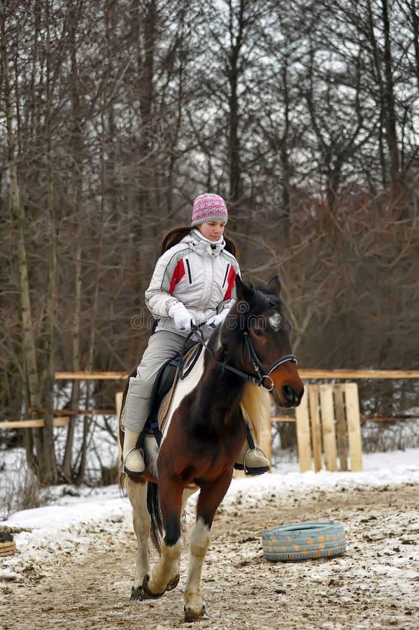 Jinete del caballo del invierno imagen de archivo libre de regalías