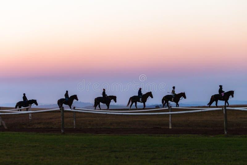 Jinetes de los novios de los caballos de raza que entrenan a amanecer fotografía de archivo