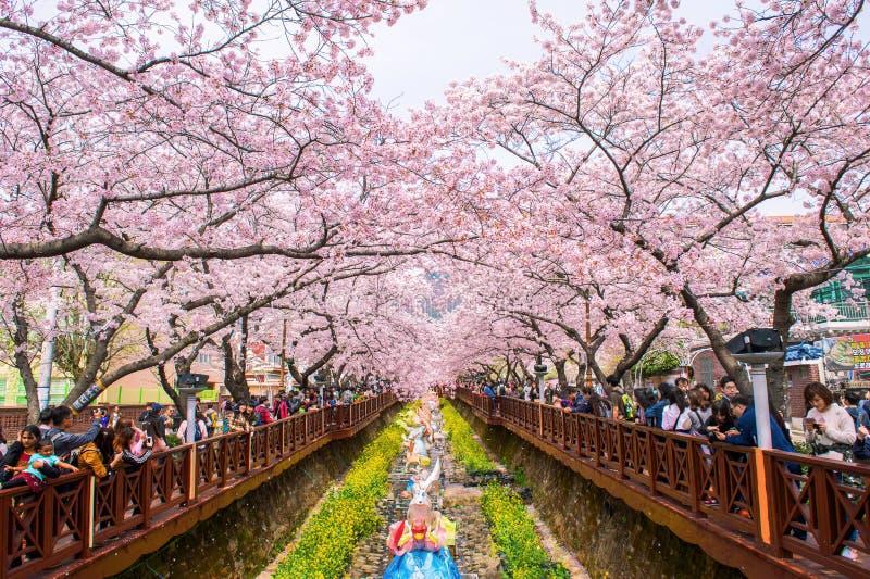 JINHAE,KOREA - APRIL 4 : Jinhae Gunhangje Festival. Editorial Photography - Image of bloom ...