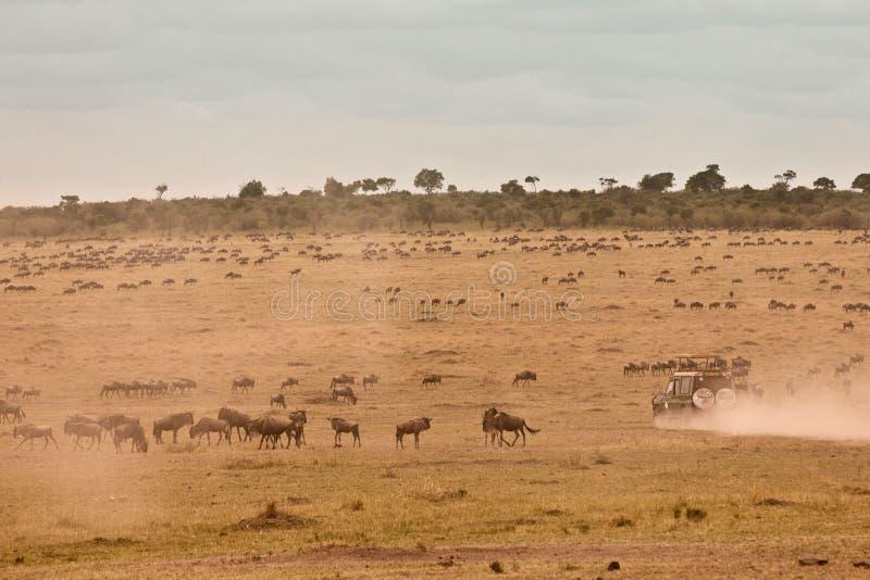 Jipe africano do safari fotos de stock royalty free