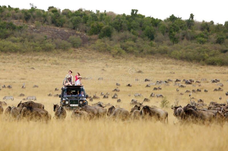 Jipe do safari para a movimentação do jogo no Masai Mara imagens de stock royalty free