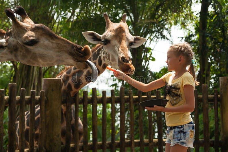 Jirafa de alimentación de la niña Niño feliz que se divierte con los animales imágenes de archivo libres de regalías