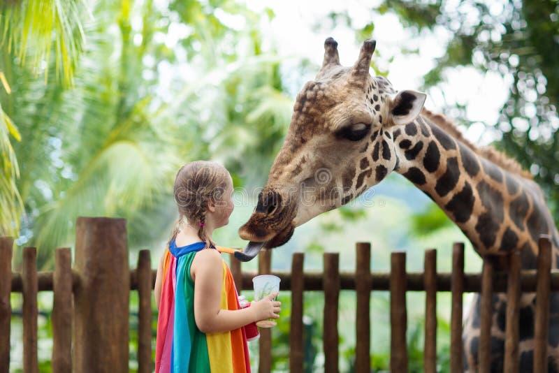 Jirafa de la alimentación de los niños en el parque zoológico Niños en el parque del safari imágenes de archivo libres de regalías
