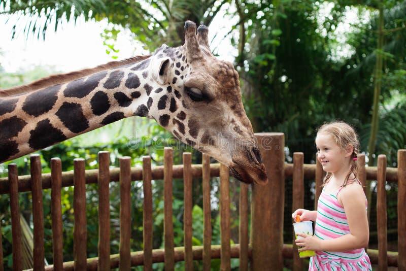Jirafa de la alimentación de los niños en el parque zoológico Niños en el parque del safari fotos de archivo libres de regalías