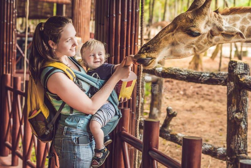 Jirafa de observación y de alimentación feliz de la madre y del hijo en parque zoológico Familia feliz que se divierte con el par fotografía de archivo libre de regalías