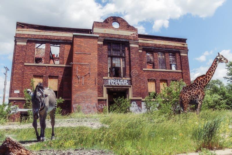 Jirafa y vecindad abandonada cebra fotografía de archivo libre de regalías