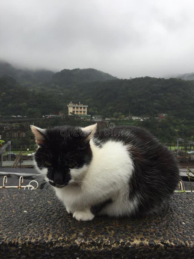 Jiufen Taipei Tajwan, kot wioska fotografia royalty free
