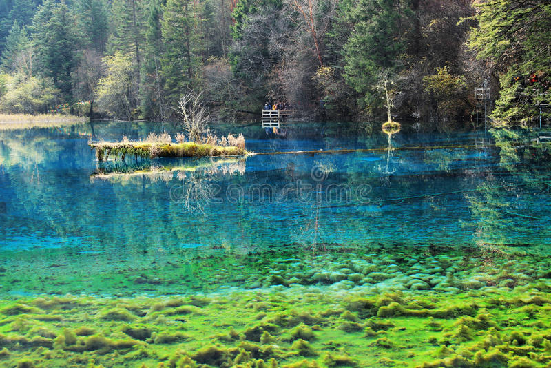Jiuzhaigou five Flower Lake stock photography