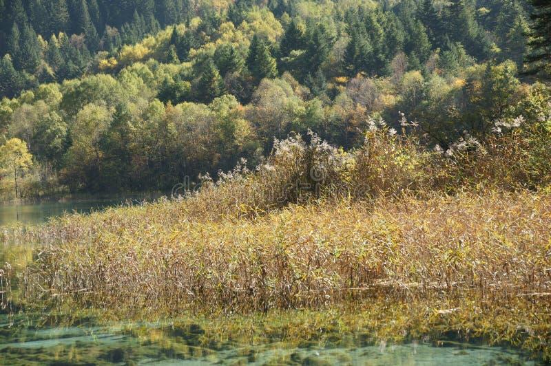 Jiuzhaigou jesieni sceneria w Chiny zdjęcie stock