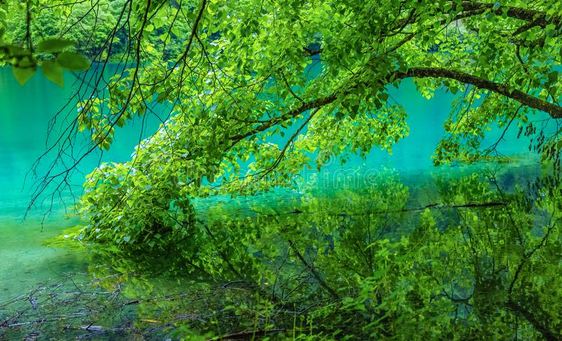 Jiuzhaigou lake and forest trees。 jiuzhaigou is a famous natural scenic spot in China.There are thick forests and vegetation. stock photo