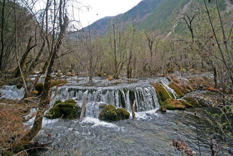 Jiuzhaigou parka narodowego siklawa w drewnach zdjęcia royalty free