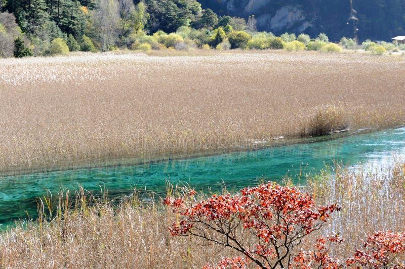 Jiuzhaigou Reed Lake Stock Images