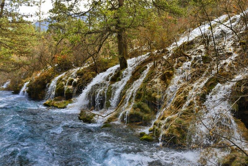 Jiuzhaigou, Sichuan, China - cachoeiras e abeto imagem de stock royalty free