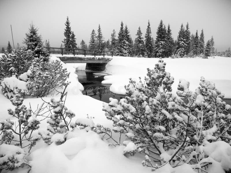 Jizera山的Jizerka河,捷克 免版税库存照片