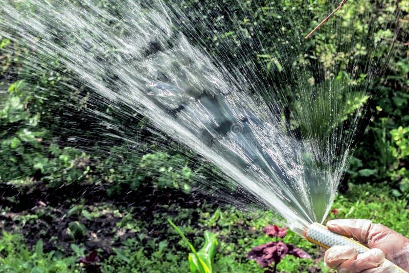Jjet del agua de una manguera fotografía de archivo