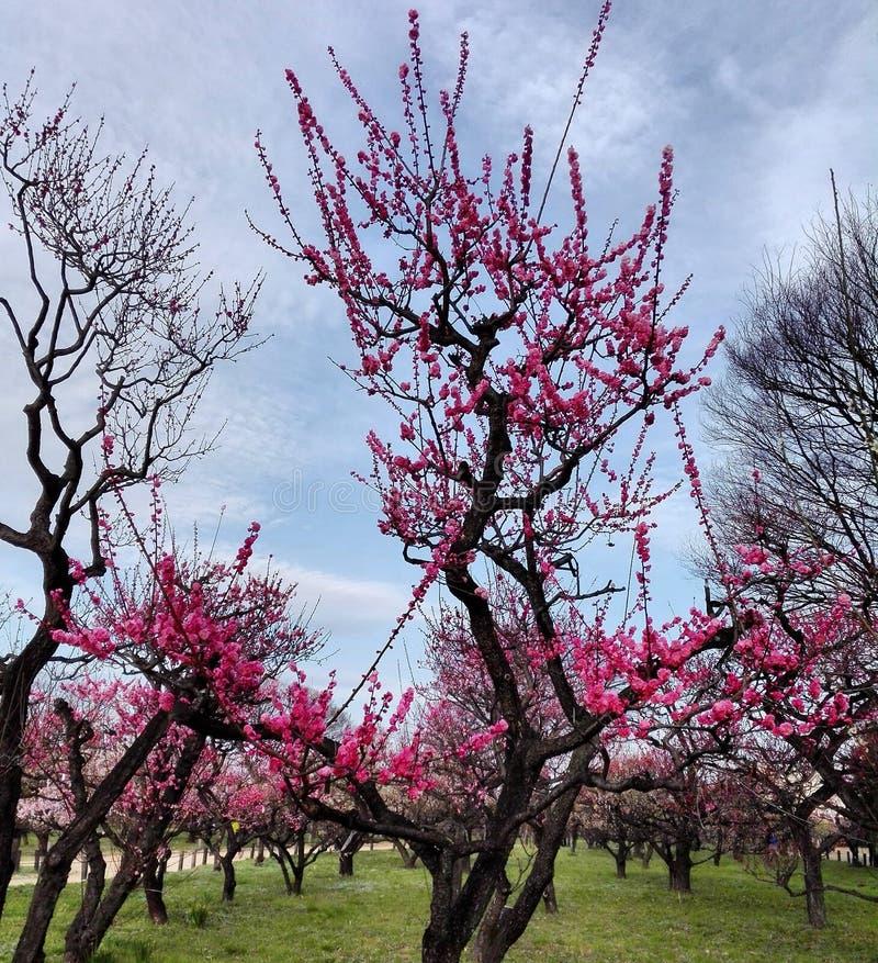 Jo Koen de Osaka foto de archivo