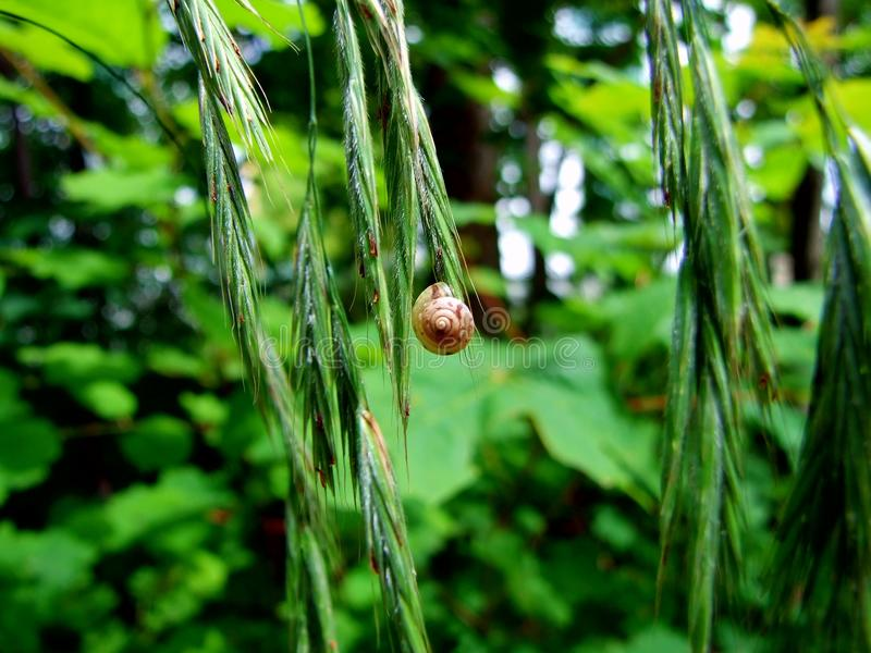joaninha, inseto, natureza, joaninha, grama, verde, macro, vermelho, folha, erro, planta, verão, besouro, mola, animal, jardim, f imagem de stock royalty free