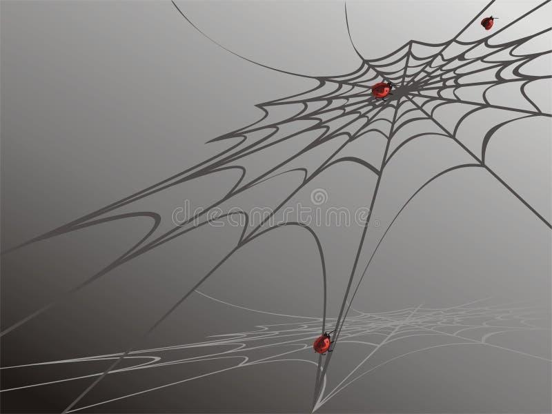 Joaninha no Web de aranha fotos de stock