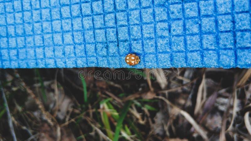 Joaninha que senta-se em um close up azul do tapete do piquenique imagem de stock royalty free