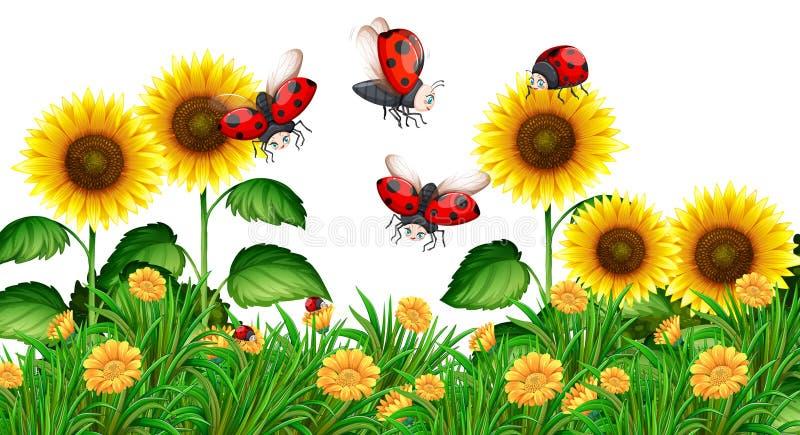 Joaninhas que voam no jardim do girassol ilustração do vetor