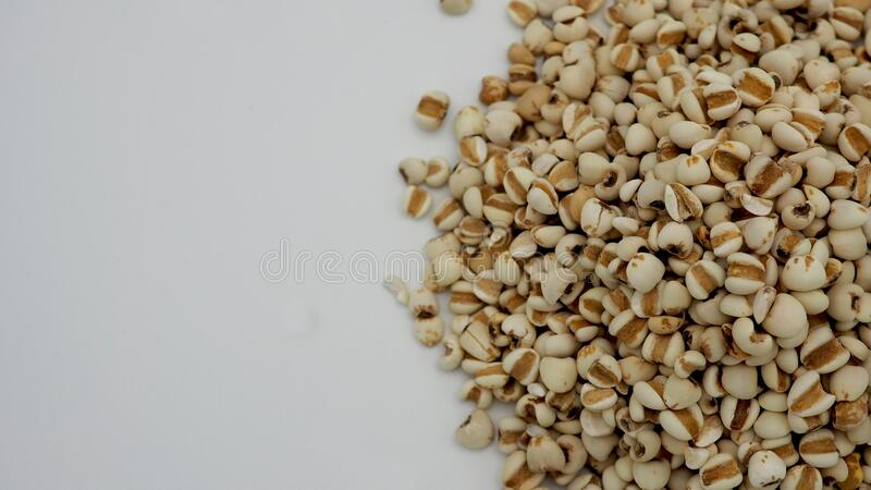 Job`s Tears, also known as adlay and coix on white background. Popular in Asian cultures as a food source.  stock photo