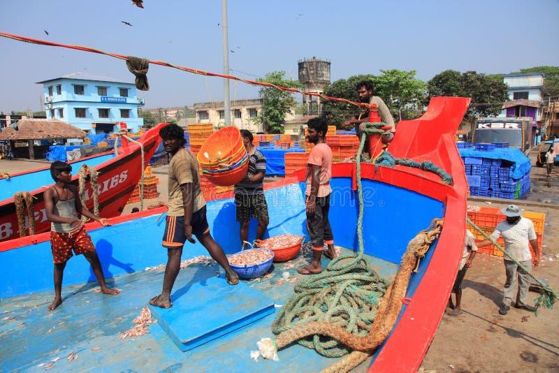 Jobbare lastar av fisken från fartygen royaltyfria foton