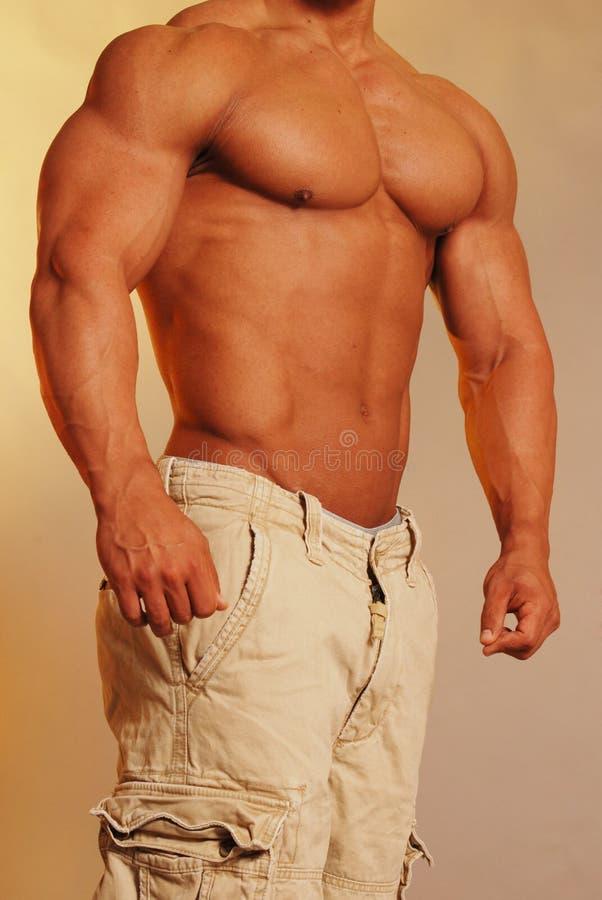 Jock in cargo shorts. Buff male bodybuilder in tan cargo shorts royalty free stock images