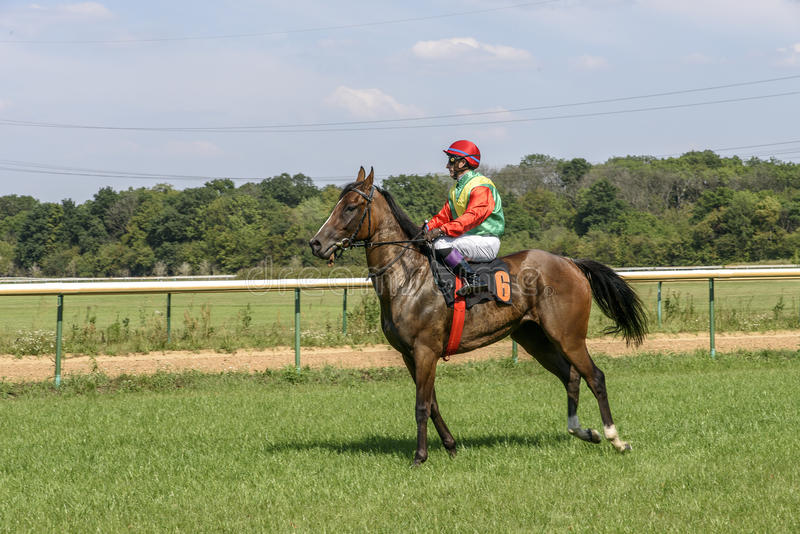 Jockey in bright clothes on bay horse royalty free stock photography