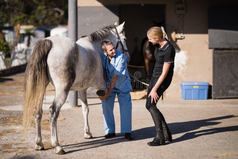 Jockey féminin parlant au sabot de examen de cheval de vétérinaire photos libres de droits