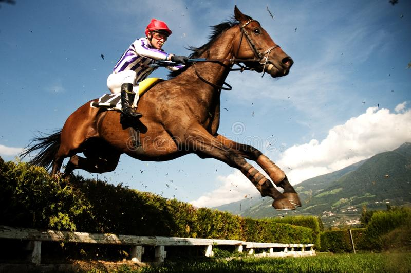 Jockey on horse. The horse jumps the obstacle (a hedge). Hippodrome of Merano Maia (Tyrol), season 2009