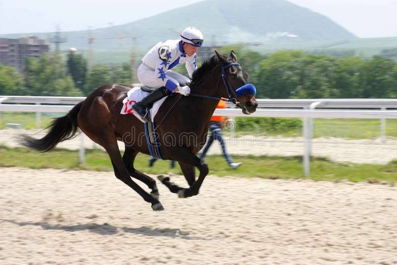 Jockey and horse in summer royalty free stock photography