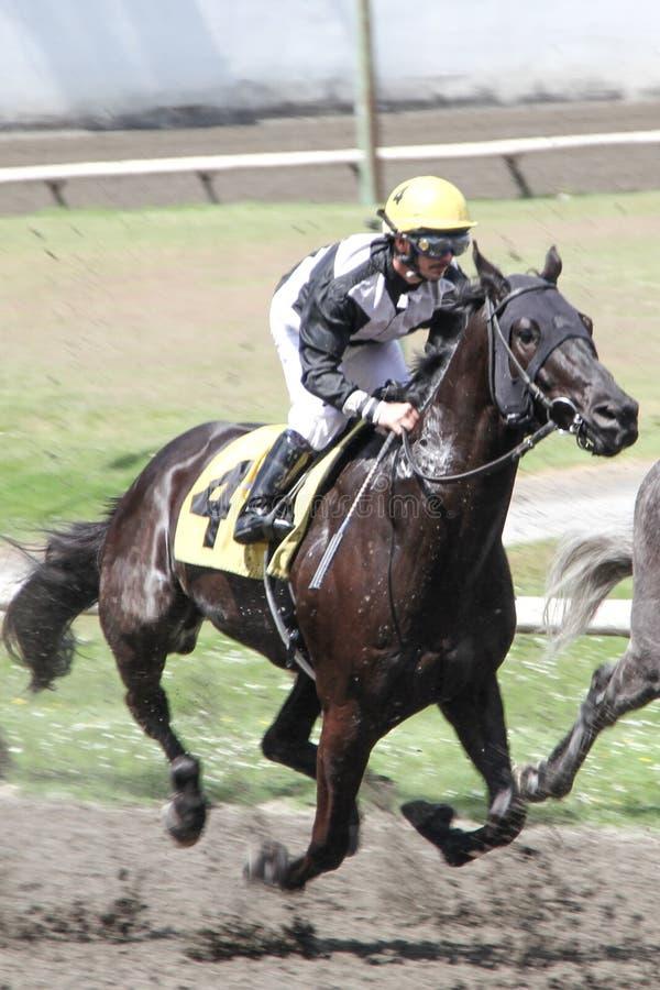Jockey och häst i ett lopp arkivbild