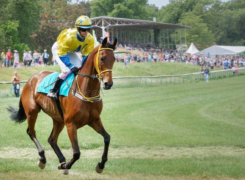 Jockey op het zuringspaard Opwarming Het rennen 22 Augustus 2015 Maagdenburg, Duitsland stock foto's