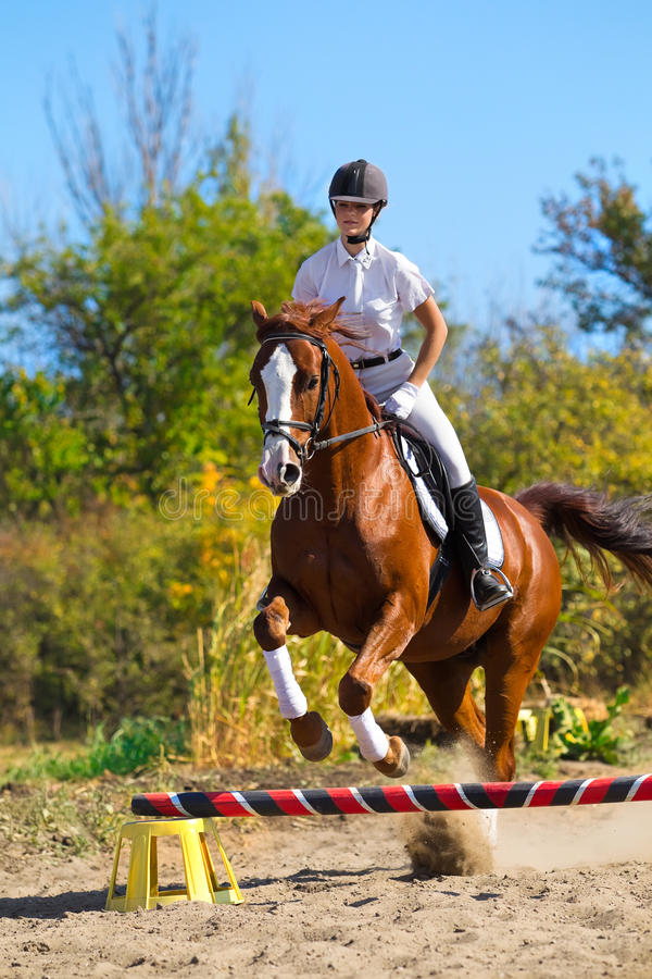 Jockey with purebred horse. Image of female jockey with purebred horse, jumping a hurdle stock photos
