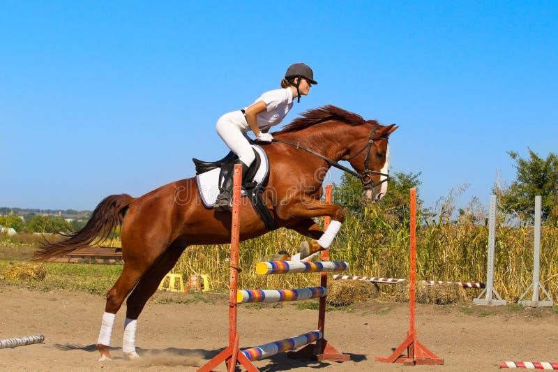 Jockey with purebred horse stock photography