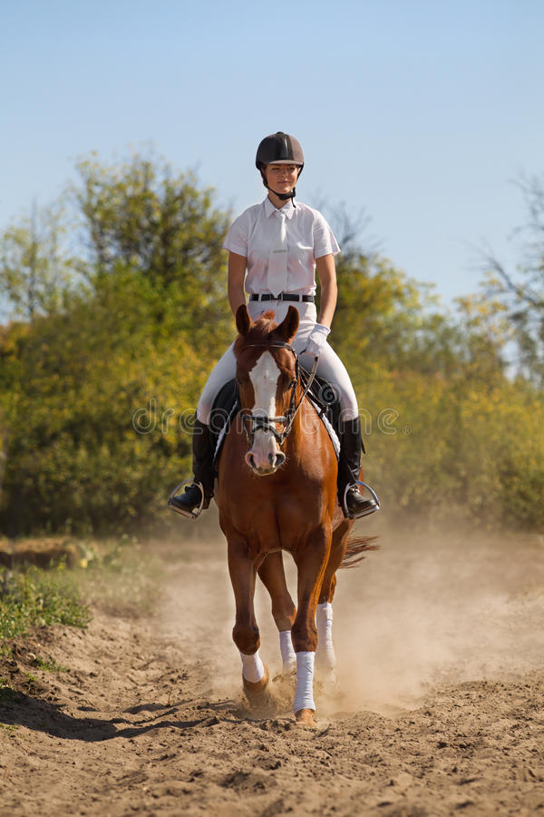 Download Jockey with purebred horse stock image. Image of equestrian - 27625241