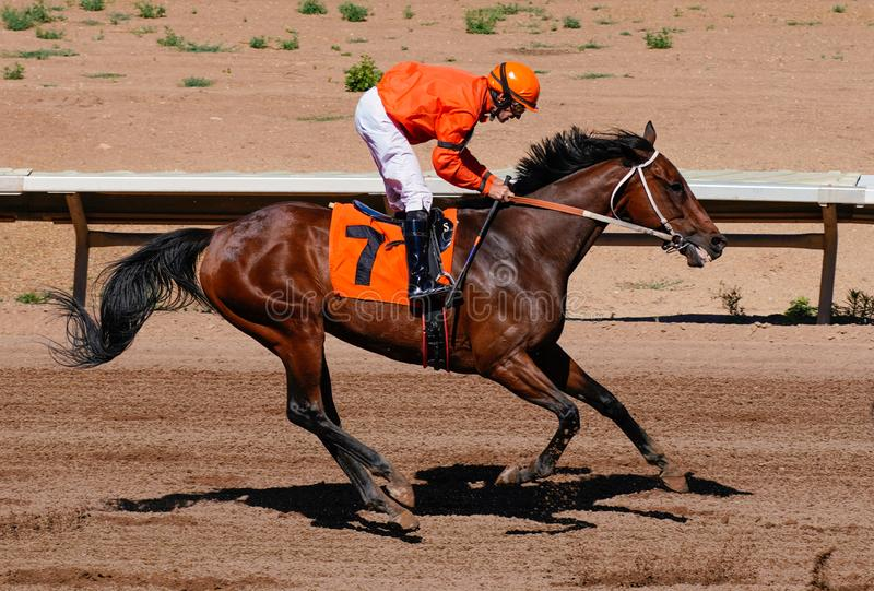 Putting on the Brakes. The jockey puts on the brakes after finishing the horse race. Photo taken at Arizona Downs, Prescott Valley, Arizona on June 23, 2019 royalty free stock image
