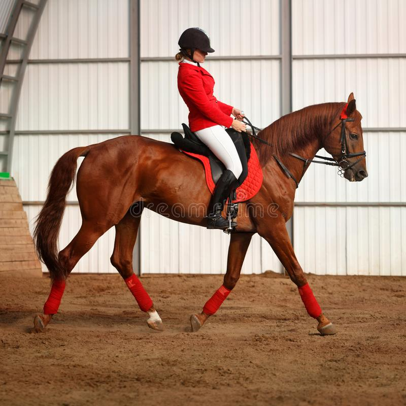 Jockey riding a horse gait. A girl jockey rides a horse in gait in a covered arena. A pedigree horse for equestrian sport royalty free stock image