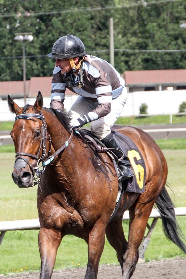 Jockey som rider en häst i ett lopp arkivfoton