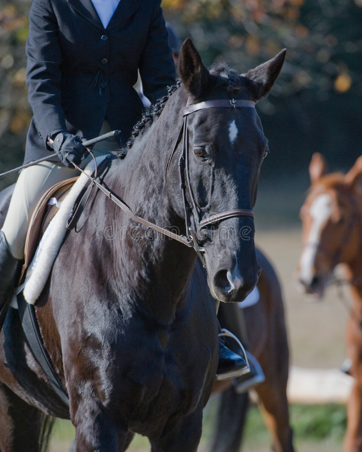 Jockeyreitpferd stockfotografie