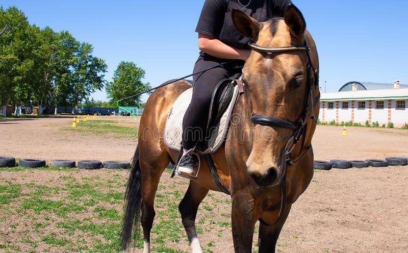 jockeyrit een paard, stabiele achtergrond stock afbeelding