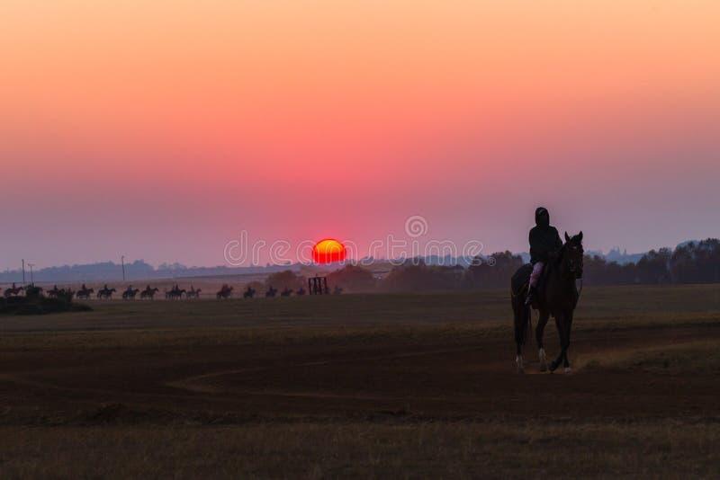 Jockeys de mariés de chevaux de course formant l'aube image stock