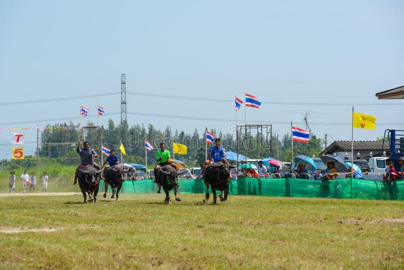 Jockeys, welche die Büffel laufen in jährliches Festival reiten lizenzfreies stockfoto
