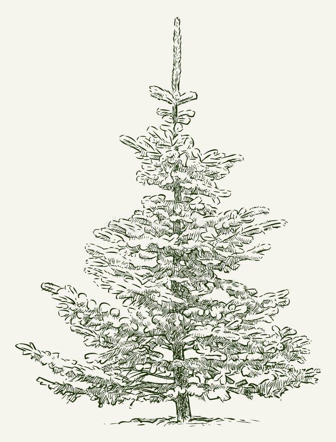 jodła biel odosobniony drzewny royalty ilustracja