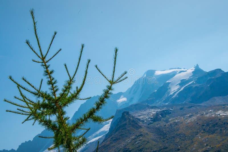 Jodła na górach obrazy stock