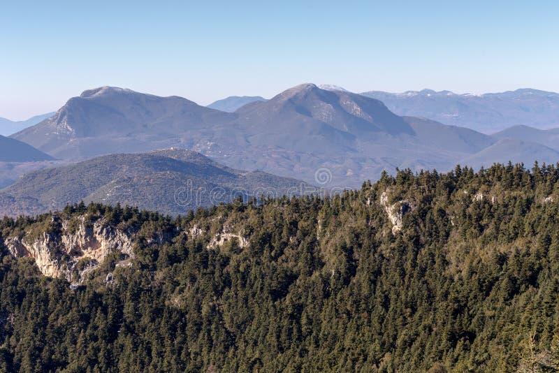 Jodły w górach na zima dniu zdjęcie royalty free