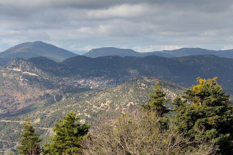 Jodły w górach na zima dniu fotografia stock