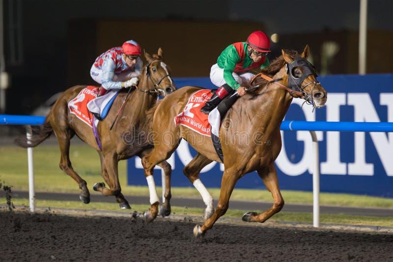 Djurriketen segrar den Dubai världscupen 2013 arkivfoton
